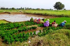 india indonesia vietnam and desh as well as the united states don t report rice farming nitrous oxide emissions to the united nations