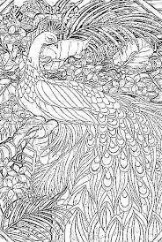 Small Picture Peacock Coloring Pages For Adults Beautiful Coloring Peacock