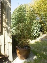 Bambou En Jardiniere Conceptions De Maison Blanzza Com