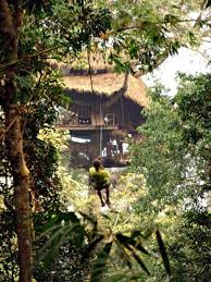 kids tree houses with zip line. Exellent Zip Hereu0027s A Massive Thatch Roofed Tree House With Zip Line To Kids Tree Houses With Zip Line
