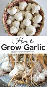 Kitchen Garden Produce 17 Best Ideas About Growing Vegetables On Pinterest How To Grow