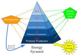 food web pyramid ecological pyramid wikipedia