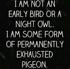 Funny Quotes And Sayings Mesmerizing 48 Funny Quotes And Sayings Funny Quotes Pinterest Funny