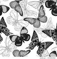 花 蝶 イラスト 白黒の写真素材 Pixta