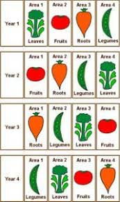 Crop Rotation Tips What Crops To Follow Up With