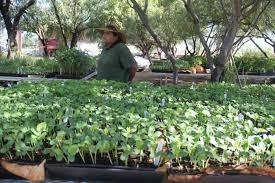 tomasina comacho and the san xavier co op farm nursery
