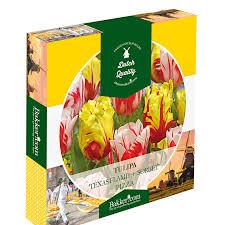 White Paper Flower Bulbs Tulip Bulbs Pizza Red Yellow White