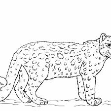 Leopard Coloring Pictures To Print With Snow Leopard Coloring Page