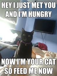 Hey I just met you And I'm hungry Now I'm your cat So feed me now ... via Relatably.com