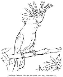 Small Picture 106 best Parrot coloring pages images on Pinterest Drawings