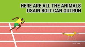 animals Usain Bolt can outrun ...