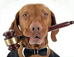 Image result for animal eat lawyer