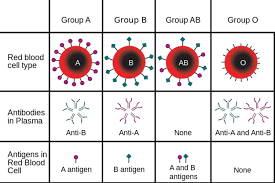 Learn About Blood Type