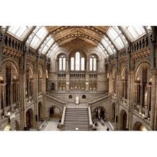 natural history museum tempered glass wall art 80cm x 120cm