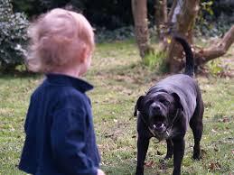 Папа, папа, хочу собаку!