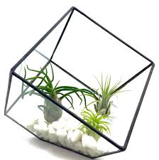 Geometric Black Cube Air Plant Terrarium Kit, Black Geometric Cube, White  Rocks