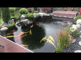 amazing backyard koi pond garden design