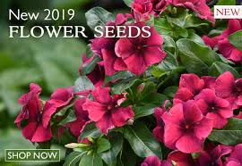 new 2019 flower seeds now