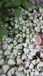 Small Picture Best 25 Ground cover shade ideas on Pinterest Ground cover