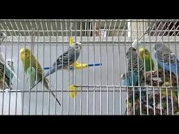 How to Choose Your <b>Bird's Cage</b> - YouTube