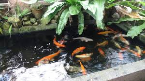 Koi Pond Design Best Designs To Prefer For Koi Pond Traditional To Unique Youtube