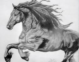 wild horse drawings in pencil. Perfect Wild Pencil Drawing  Freedom By Sandi Dawn McWilliams Intended Wild Horse Drawings In E
