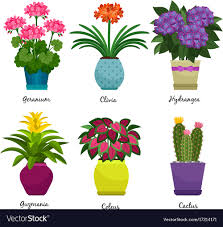 indoor home office plants royalty. Indoor Garden Plants And Flowers Vector Image Home Office Royalty