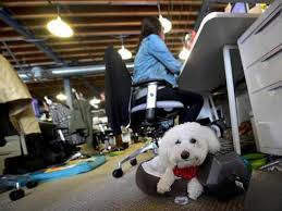 What do today's dogs want? An office (to chill, obviously!) | Hindustan  Times
