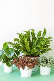 House Plants Low Light Requirements 30 Easy Houseplants Easy To Care For Indoor Plants
