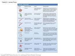 Animal Phylums Chart