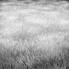 Drawn texture grass Pencil and in color drawn texture grass