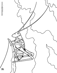Grasshopper Coloring Page There Are Many