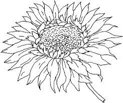 Small Picture Realistic sunflower coloring pages ColoringStar