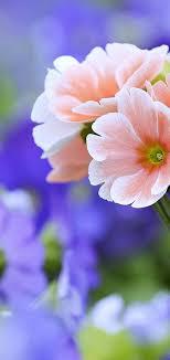 1920x1080 beautiful flowers wallpapers for desktop free beautiful flowers wallpapers hd