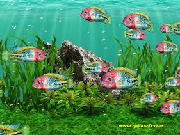 moving fish wallpaper windows 7. Vieja Fenestratus Fish Screensaver For Windows With Moving Wallpaper