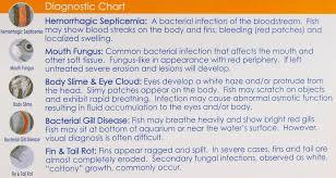 Fish Medication Chart Aap Api Aquarium Pharmaceuticals Treatments Furan 2 More