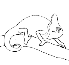 Coloring Pages Tangled Pascal Tangled Pascal The Chameleon Coloring
