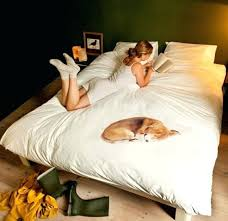 love to sleep even more if one of these cool and creative bed awesome dog proof