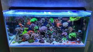 Amazing Reef aquarium 300L