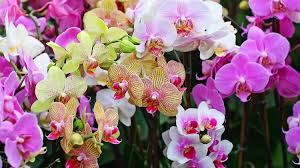 25 beautiful flowers names image 2020
