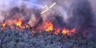 Hasil gambar untuk Sop kebakaran hutan