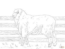 Coloring Page Sheep Coloring Pages