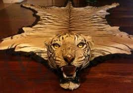 scandalous illegal wildlife trade on snapdeal and quikr tiger skin rug design