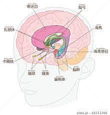 大脳 辺 縁 系