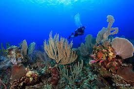 Hamanasi: The Ultimaten in Marine & Inland Adventure - Review of Dive  Hamanasi, Hopkins, Belize - Tripadvisor