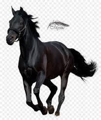 black arabian horse running. Plain Running Andalusian Horse Arabian Thoroughbred American Quarter Horse Stallion   Arab Running To Black Running