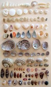 sea shells collection pin by old navy on let there be summer pinterest sea shells