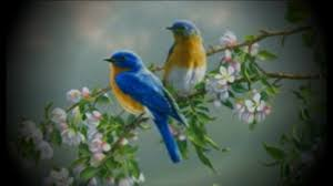 images of flowers and birds. Delighful And Beautiful Pictures Of Flowers And Butterflies Birds In Images Of Flowers And Birds YouTube
