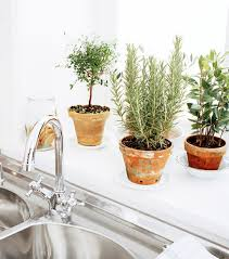 Decorating: Window Box Ideas - Window Flower Pot
