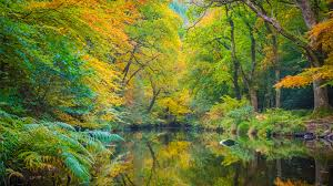 Woods in Autumn: Things to See and Do - Woodland Trust